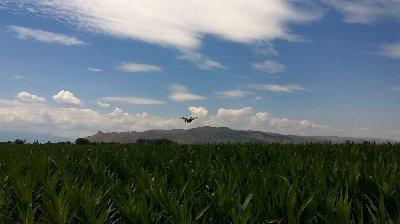 常锋植保无人机新疆玉米地RTK全自主作业